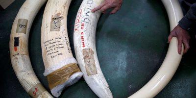 elephant ivory japan
