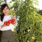 IoT and 5G to significantly boost tomato production. Source: Shutterstock