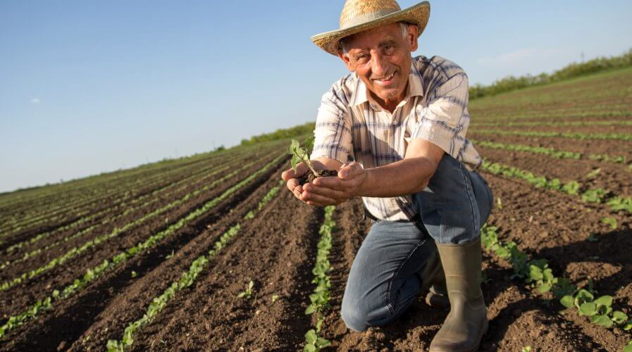 Sustainability in the agri-food industry requires innovative technology. Source: Shutterstock