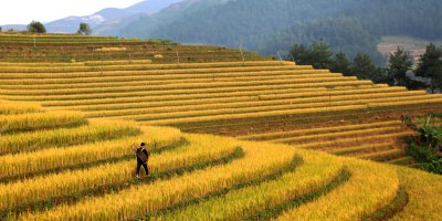 Myanmar at the crossroads of a tech-driven agriculture boom