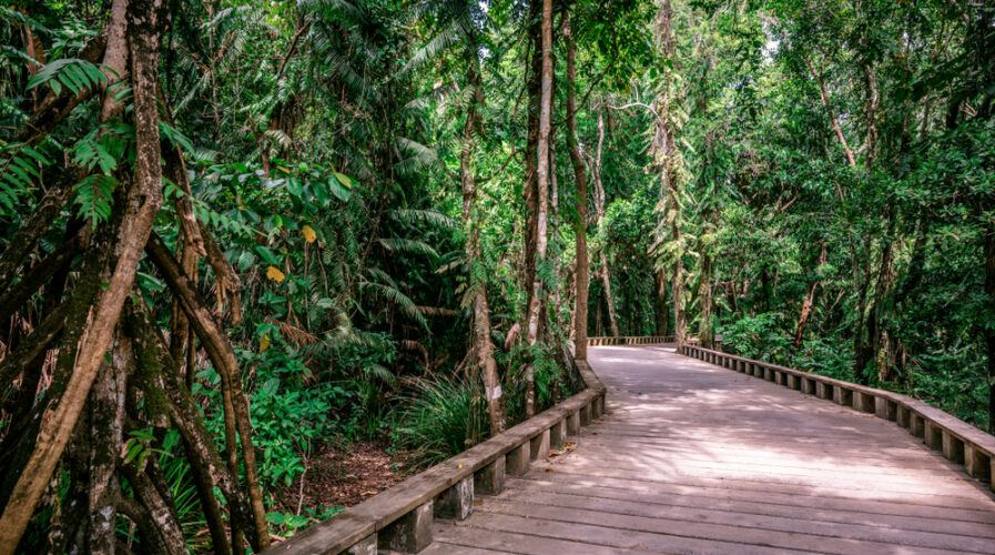 The Palawan rainforest is home to a rich array of biodiversity that's in danger of extinction.