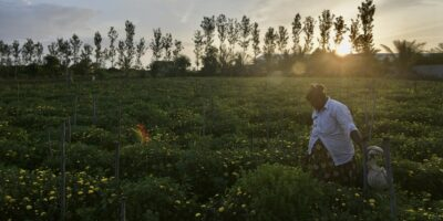 AI applications across the supply chain in the traditionally manual agriculture sector may pave the way for a better life for farmers. (Photo by Manjunath Kiran / AFP)