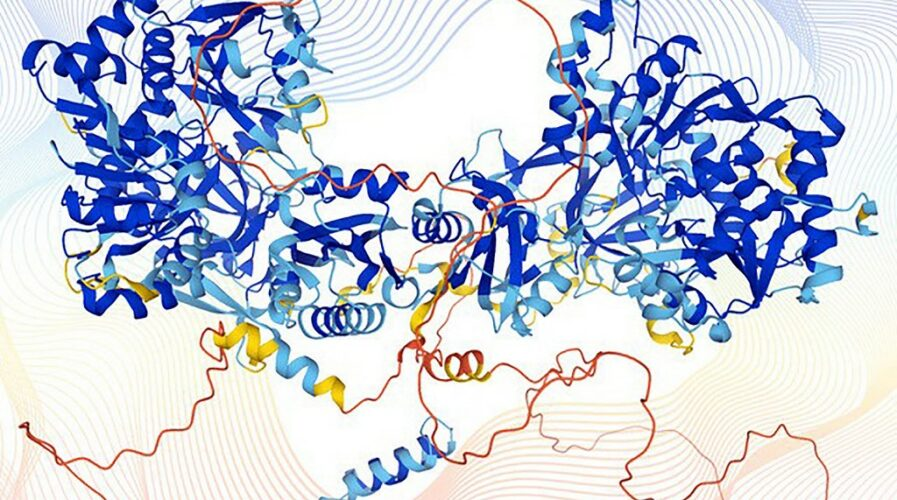 """This handout image by Karen Arnott represents the structure of a human protein modelled by the AlphaFold computer programme. Scientists unveiled the most exhaustive database yet of the proteins that form the building blocks of life, in a breakthrough observers said would """"fundamentally change biological research"""". (Photo by Handout / EMBL-EBI / AFP)"""