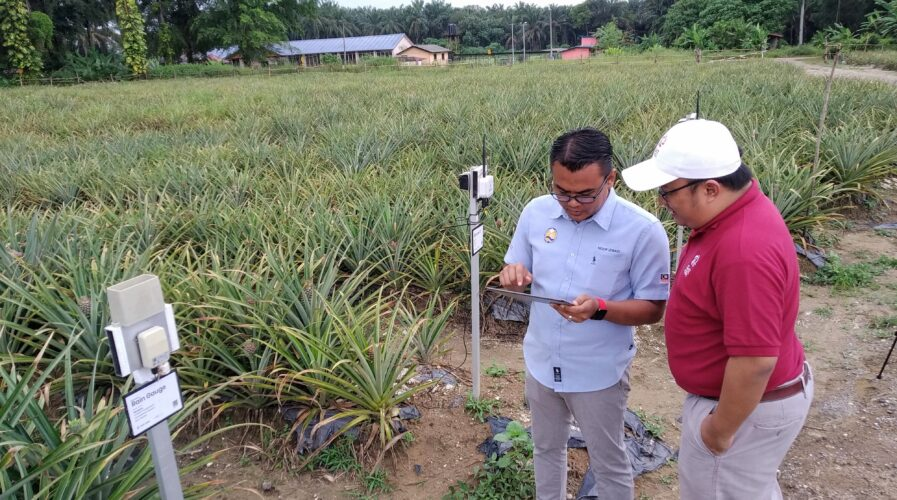 Smart farming underpins most of the modern farming today. Here, SM4RT TANI checks data their sensors have picked up in a pineapple farm.